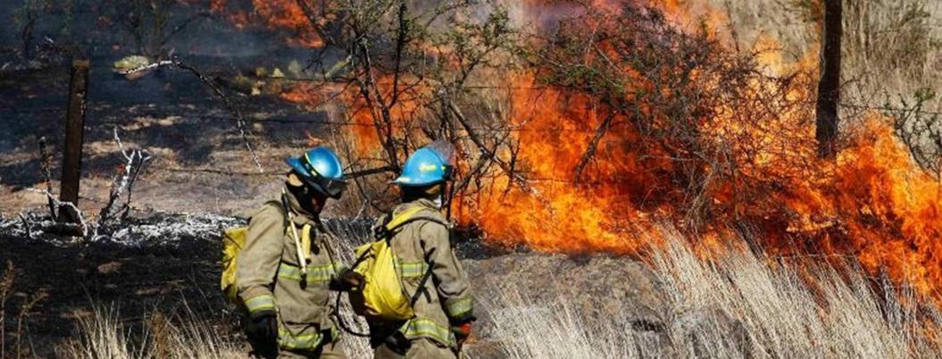 Incendios forestales de México vuelven ceniza a especies en extinción