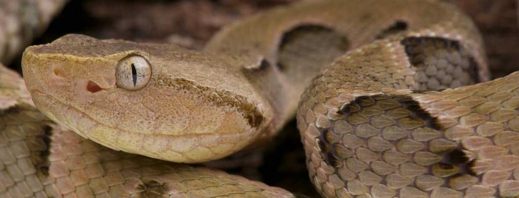Mordedura de serpientes mata a 400 mil personas cada año, advierte OMS