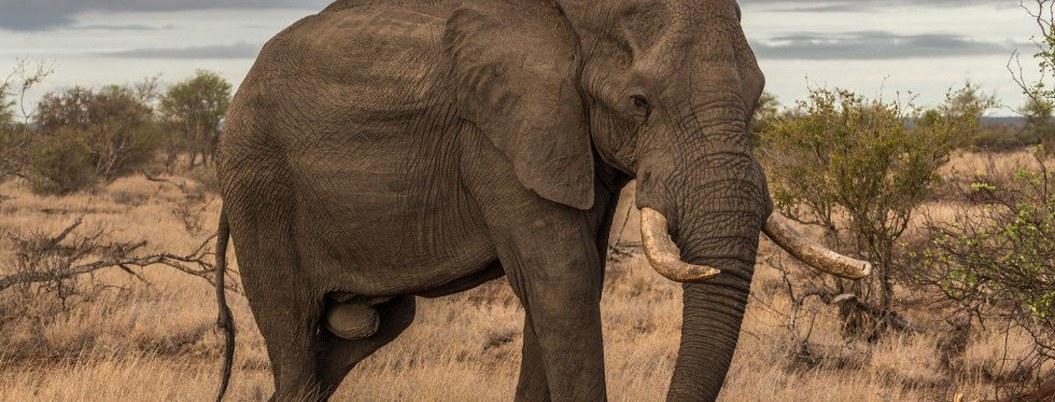 Elefante aplasta a soldado que combatía la caza furtiva