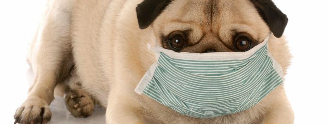 ¿Cómo proteger a tu mascota de la contaminación de la CDMX?