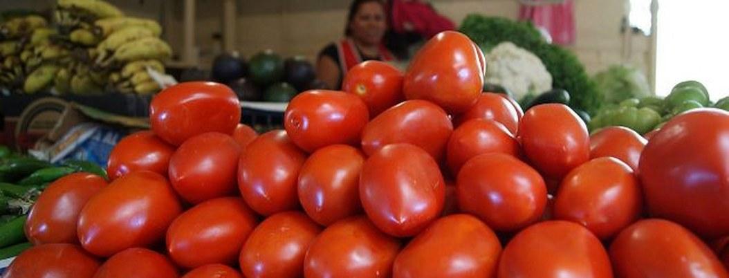 EU se ensaña con el tomate mexicano; aplican arancel de 17.5