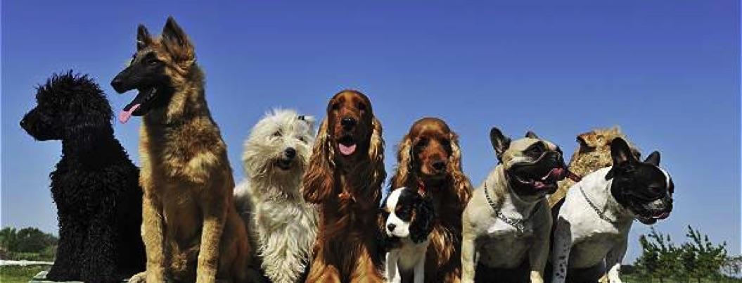 Acapulco recibirá a los mejores perros del mundo para exposición