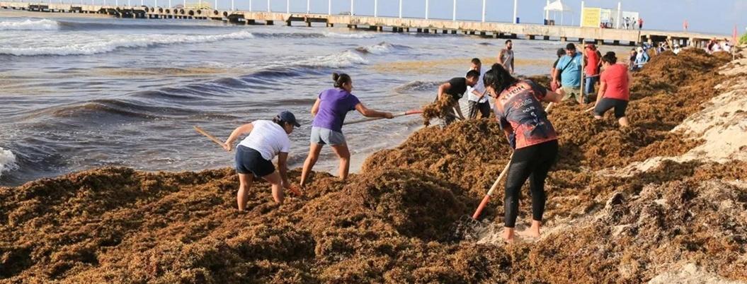 Empresarios se sumarán a combatir el sargazo en Quintana Roo