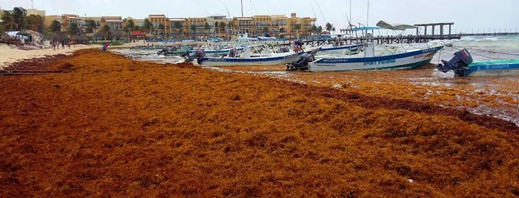 Sargazo no reduce la ocupación hotelera en Quintana Roo