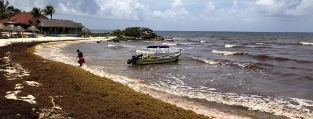 Esperan que la Semar contenga el sargazo en el Caribe mexicano