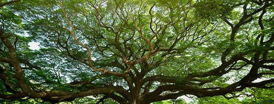 México celebra hoy a los árboles; purifican nuestro aire y nos dan vida
