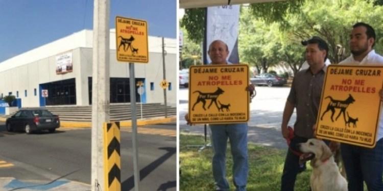 Pasos peatonales perros