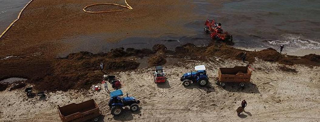 Semar ya recolectó 6.2 mil toneladas de sargazo en el Caribe