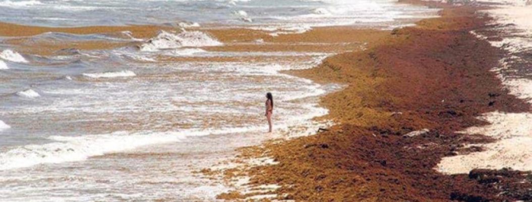 Estas son las playas de Quintana Roo que invadirá el sargazo