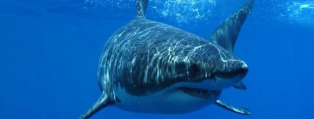 Surfista sufre grave ataque de tiburón en Florida; van 11 casos