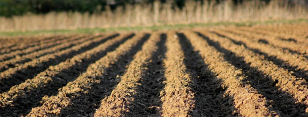 Naturaleza cambió para bien y para mal con surgimiento de agricultura