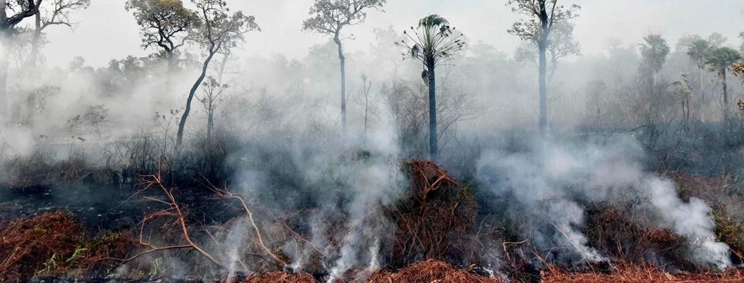 Incendios forestales se reducen en Bolivia