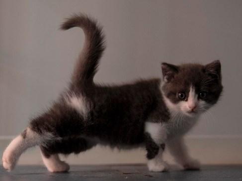 Ajo Gato Clonado 1