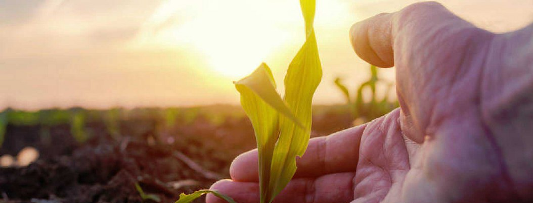 La naturaleza ya no puede más; disminuirá la producción alimentaria