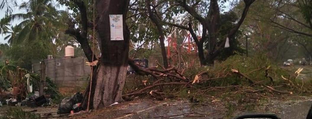 Tormenta con granizo deja daños en casas y árboles caídos en Tecpan