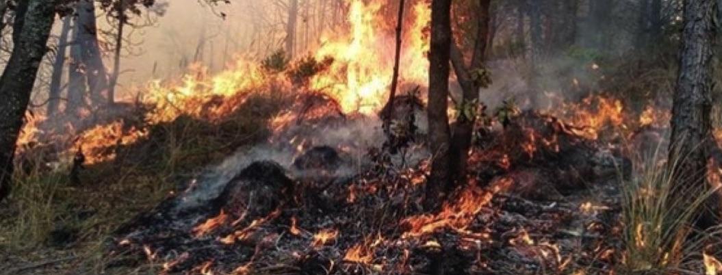 Incendio consume más de 30 hectáreas de bosque en Perote, Veracruz