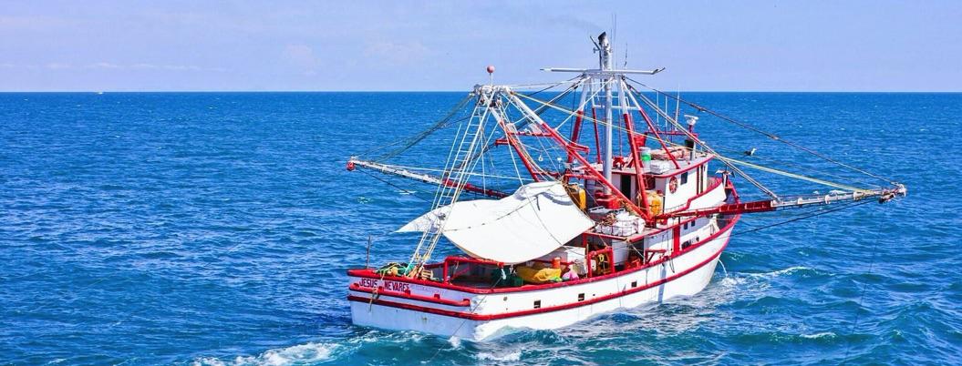 Mexico impone veda para pesca de camarón en el Pacífico 2