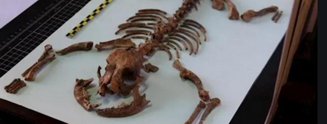 Romanos tenían perros como mascotas hace más de 2 mil años