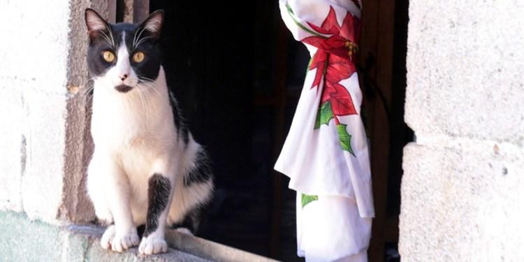 Medicina para gatos la posible cura para el coronavirus: científicos 1