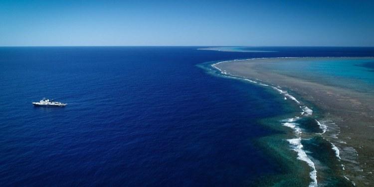 Más alto que el Empire State, así es el arrecife de coral descubierto en Australia 1