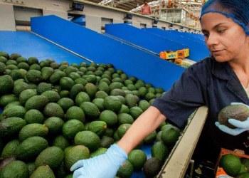 Precios al consumidor crecen en agosto; aguacate y chile serrano los de mayor incidencia 10
