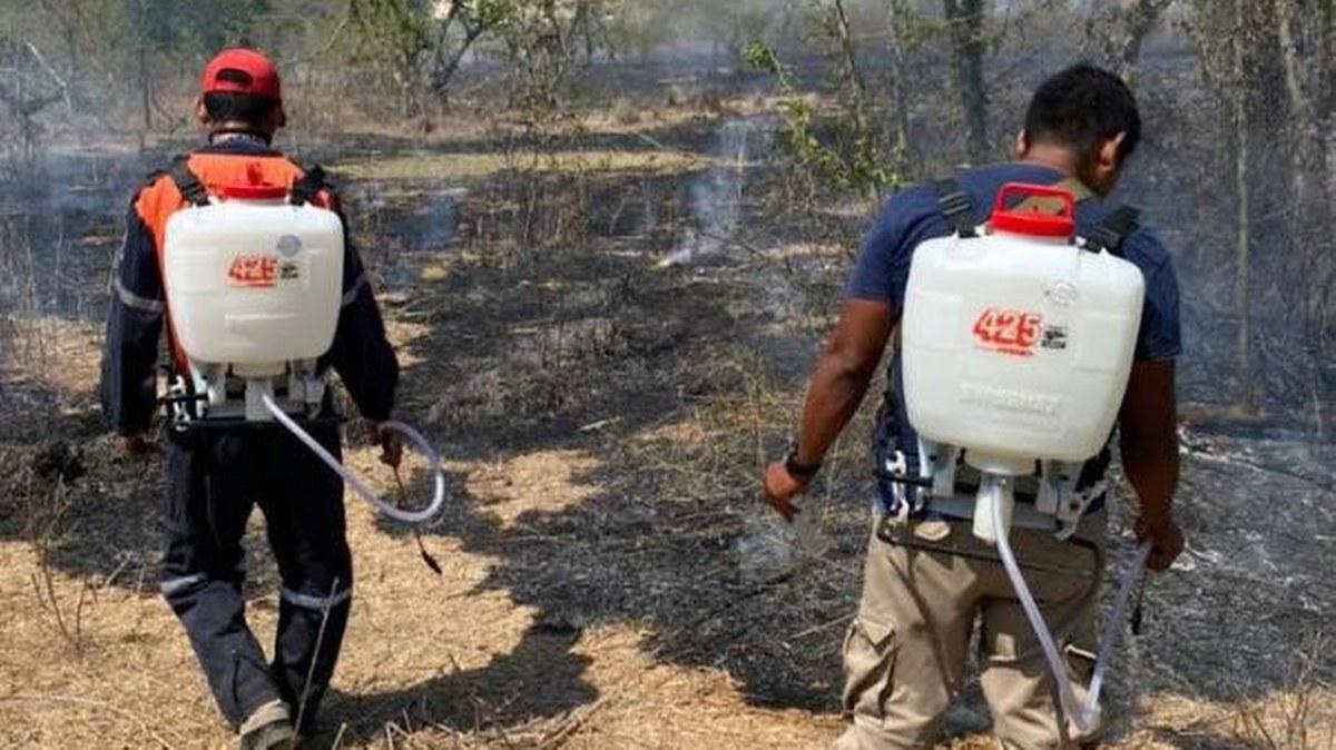 Hay cinco incendios forestales y suburbanos activos en Guerrero 1