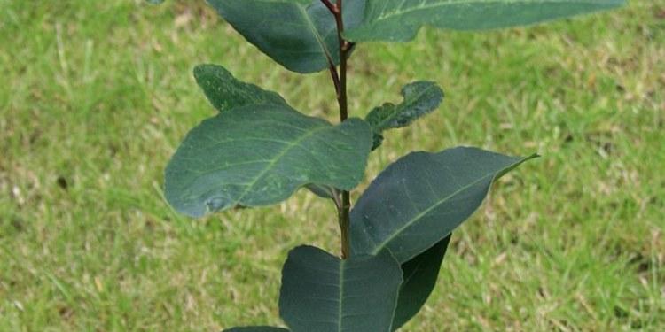 ¿Orinas a gotitas y te levantas varias veces en la noche?; esta planta maravillosa te puede ayudar 1
