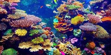 Completan el primer mapa detallado de los arrecifes de coral del mundo 9
