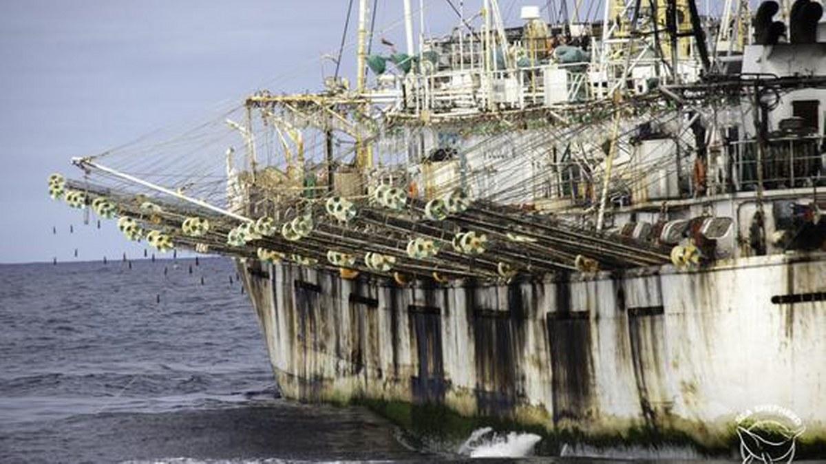 Flotas pesqueras chinas agotan las poblaciones de peces del mundo; depredan océanos 1