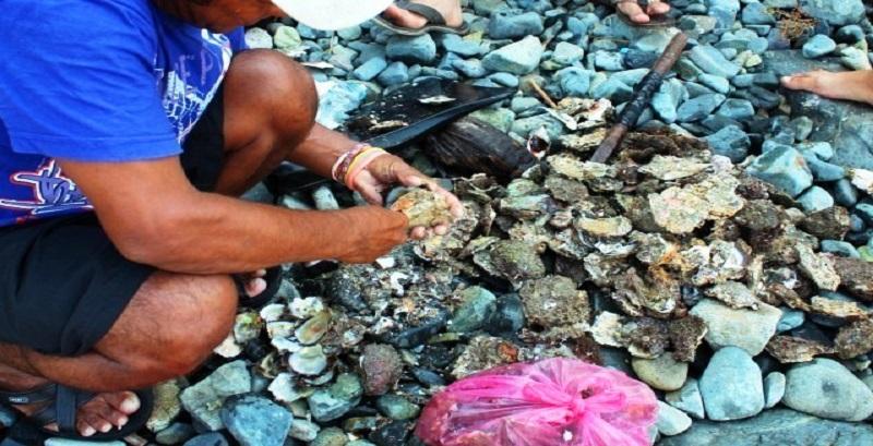 Salud Guerrero decreta veda para la venta de moluscos en Acapulco