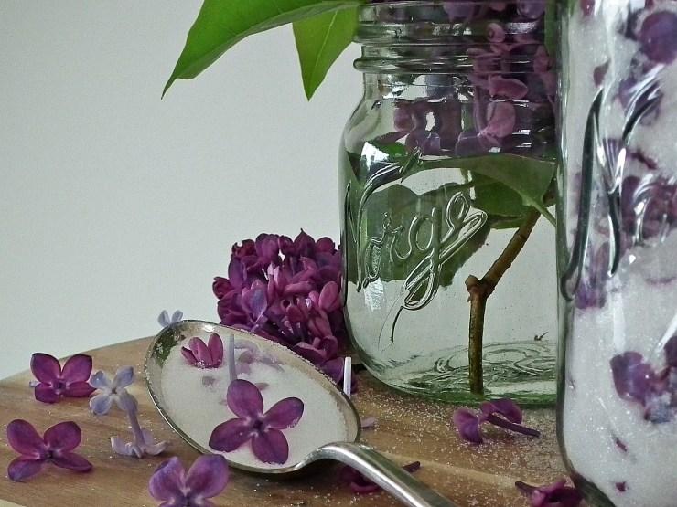syrinsukker_syrin_sukker_spiseligeblomster_spiselig_blomst_baking_norgesglass_oppskrift_bakemagi_3