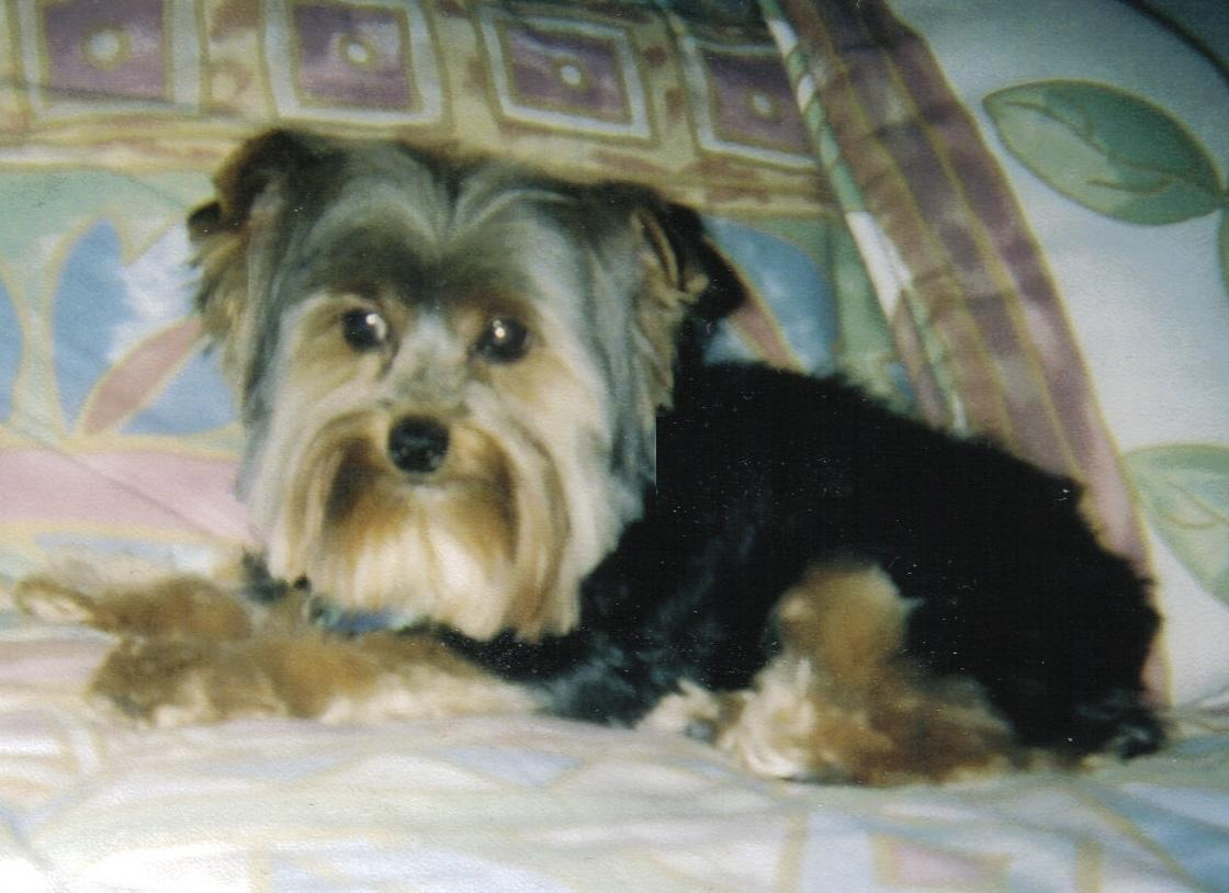 Holly on Bed