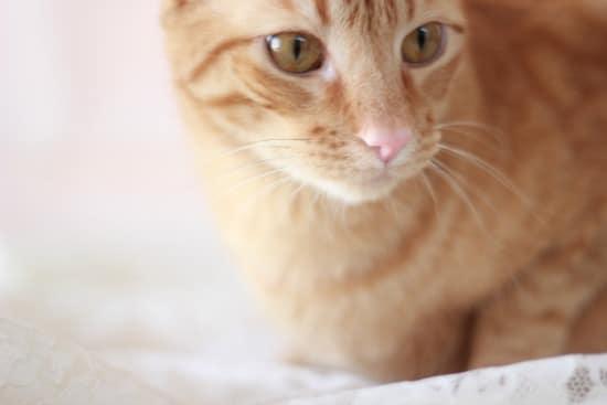 An upclose photo of an orange cat