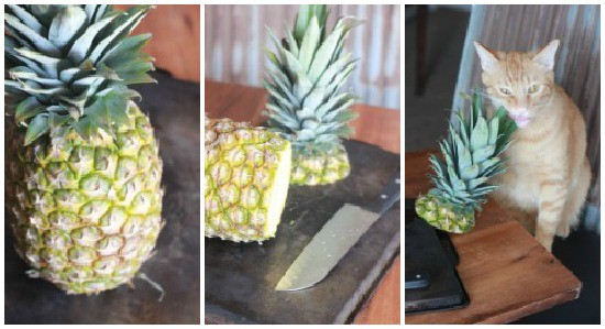 Collage of photos: left is a whole pineapple, middle is a cut pineapple, right is head of pineapple beside an orange cat