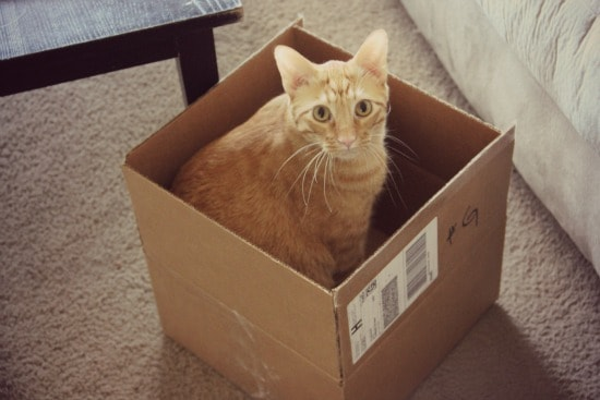 Orange cat sitting in a cardboard box