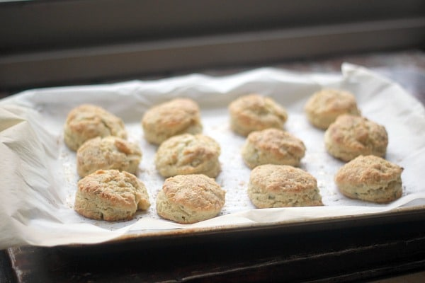 Freshly baked biscuits on a baking sheet