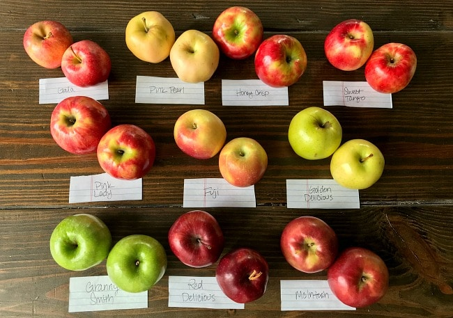 Variety of 10 apples lined up that will be tested for apple pie filling.