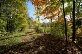 Nearby Walking Path