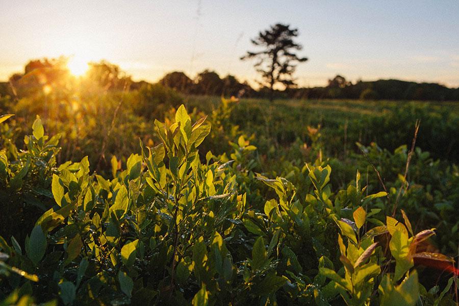 shenandoah-29 Sunrise in Shenandoah National Park Our Life Travel Washington DC