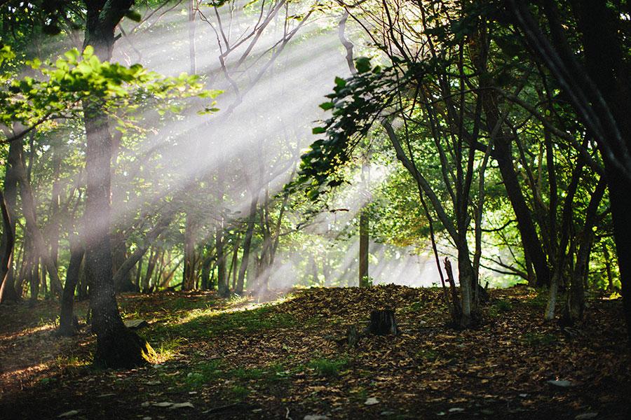 shenandoah-62 Sunrise in Shenandoah National Park Our Life Travel Washington DC