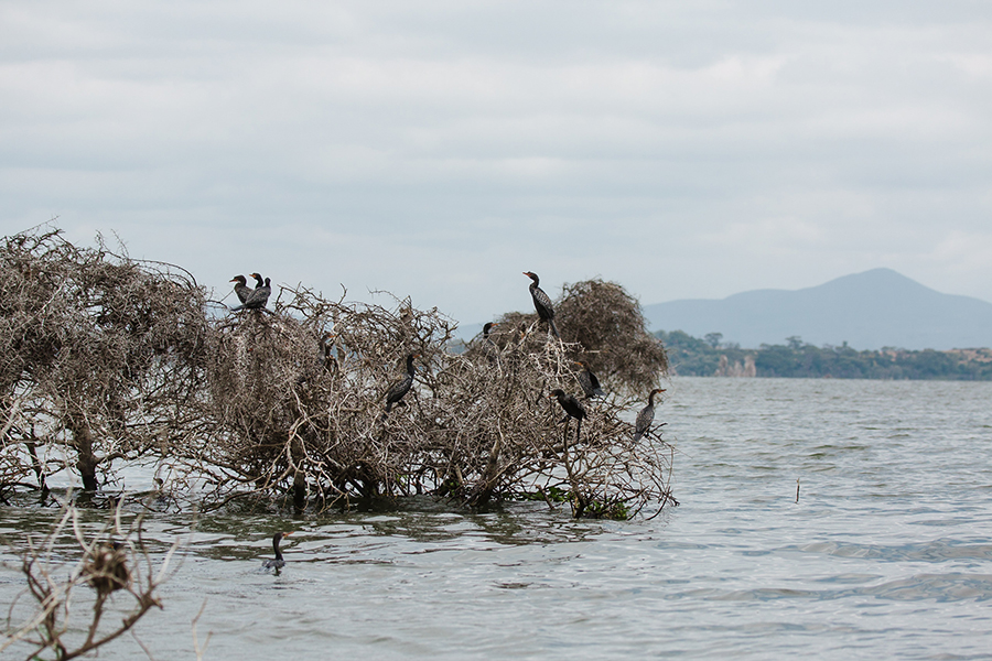 Naivasha-18 Lake Naivasha Water Safari Photography Travel