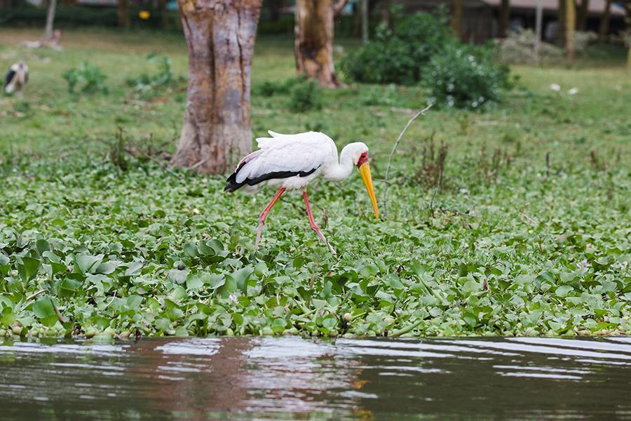 Naivasha-8 Lake Naivasha Water Safari Photography Travel