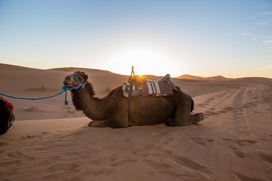 Sahara-Desert-250 The Sahara Desert Our Life Travel