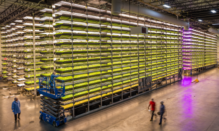 CARGILL PARTNERS WITH AEROFARMS IN 'FIRST-OF-ITS-KIND' COCOA PRODUCTION RESEARCH