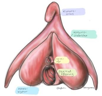 Lång Klitoris