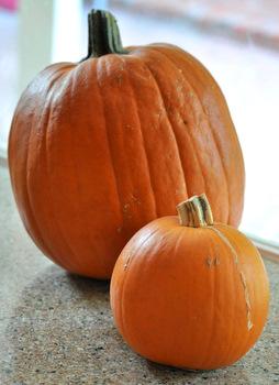 Image result for sugar pumpkin