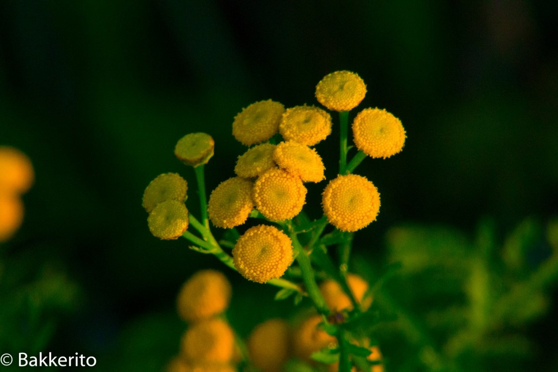 Yellow flowers in the morning.