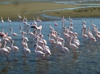 RTW_2017_dag_0044_namibia (01d)__walvis_bay_flamingos