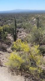 18.1492875416.desert-museum