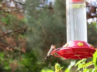 9.1378391842.hummingbird-central